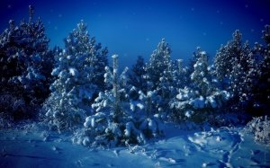 Christmas-new-year-forest-christmas-tree-snow