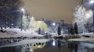 City-Park-Trees-Winter-Snow-Lights