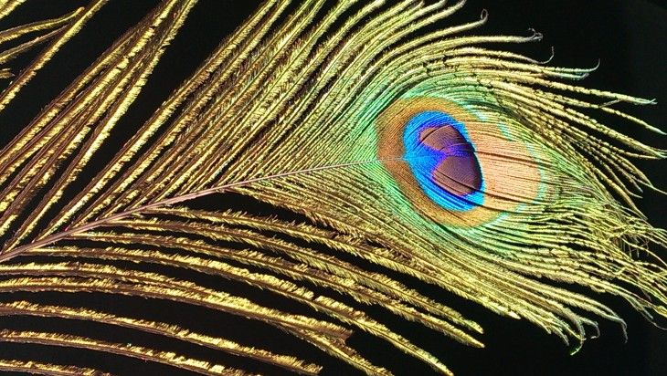 HTC-One-Peacock-Feather-730x412