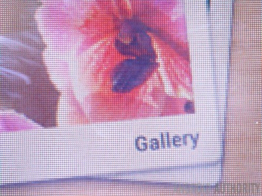 gallery-Full-HD-710x532